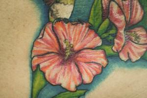 colibris hibiscus-1