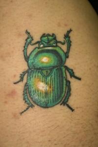 scarabee 3-1
